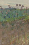Полевые цветы, 1902 - Пирс, Чарльз Спрэг