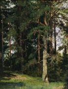 Лес (этюд), 1880-е - Шишкин, Иван Иванович