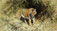 Тигр, тигр, жгучий страх, Ты горишь в ночных лесах - Шеперд, Девид (20 век)