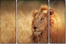 Лев в поле - -