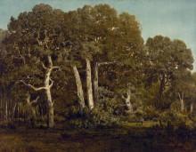 Старые дубы - Руссо, Теодор