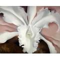 Последняя орхидея Нарцисса - О'Кифф, Джорджия