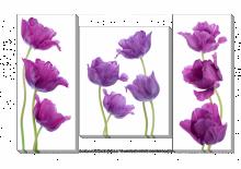 Тюльпаны_2