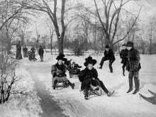 Дети на санках в Центральном парке