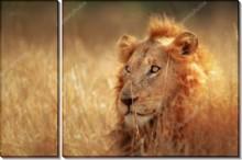 Лев в поле - Сток