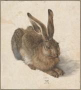 Заяц - Дюрер, Альбрехт