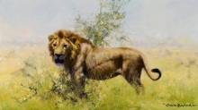 Лев в прерии - Шеперд, Девид (20 век)