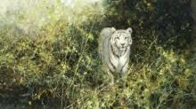 Белый тигр Ревы - Шеперд, Девид (20 век)