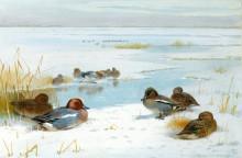 Зимний пейзаж с утками - Торберн, Арчибальд