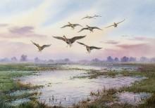 Белолобые гуси, спускающиеся на воду - Доннер, Карл (20 век)