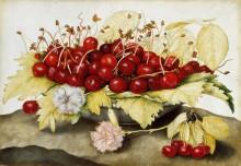 Тарелка с вишнями - Гарцони, Джованна
