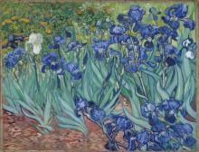 Ирисы (Irises), 1889 - Гог, Винсент ван
