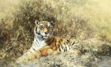 Тигр из Рантхамбора - Шеперд, Девид (20 век)
