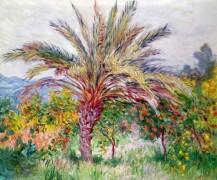 Пальма в Бордигере - Моне, Клод