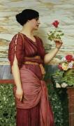 Красная роза - Годвард, Джон Уильям