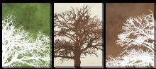 Деревья триптих