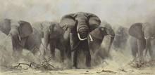 Стадо слонов - Шеперд, Девид (20 век)