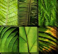 Листья макро
