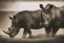 Носороги - Брандт, Ник