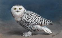 Полярная сова - Харрисон, Джон