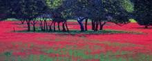 Красный шок - Нил, Тревор