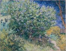 Куст сирени (Lilac Bush), 1889 - Гог, Винсент ван