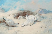 Тундряные куропатки в поисках убежища - Торберн, Арчибальд