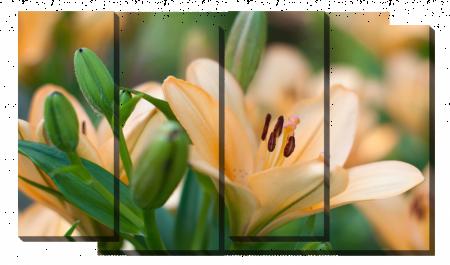 Кремовая лилия_2