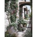 Плетистые розы - Борелли, Гвидо (20 век)