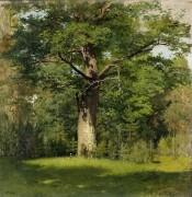 Дуб. 1880 - Левитан, Исаак Ильич