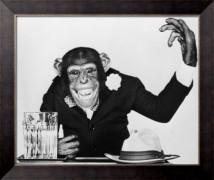 Шимпанзе Бонзо