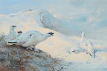 Тундряные куропатки на снегу - Торберн, Арчибальд