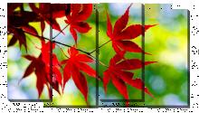 Красные листья на зеленом
