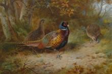 Птицы в осеннем пейзаже - Торберн, Арчибальд