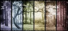 Дерево в переливах цвета_2