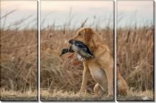 Собака с трофеем - Сток
