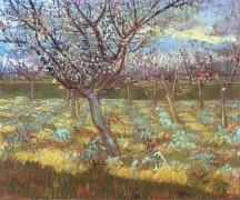 Абрикосовое дерево в цвету (Apricot Tree in Bloom), 1888 - Гог, Винсент ван