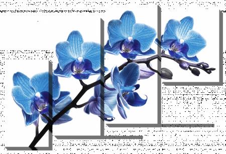 Ветка с голубыми орхидеями