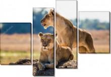 Пара львов - Сток