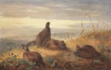 Выводок куропаток на закате дня - Торберн, Арчибальд