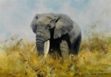 Африканский слон - Шеперд, Девид (20 век)