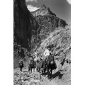 Поезлка на мулах в Гранд-Каньоне - Гендро, Филипп