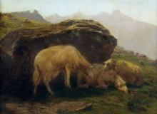 Овцы на склоне холма - Бонёр, Роза