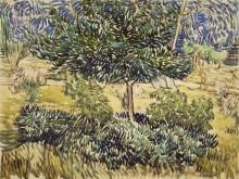 Деревья и кустарник в саду лечебницы Сен-Поль (Trees and Shrubs in the Asylum Garden), 1889 - Гог, Винсент ван