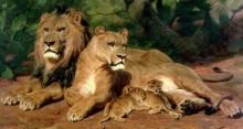 Лежбище львов - Бонёр, Роза
