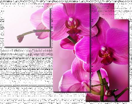Орхидеи в розовом