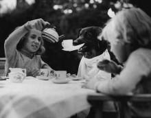 Собака во время чаепития