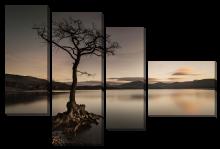 Дерево у воды_2