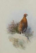 Красная куропатка - Торберн, Арчибальд
