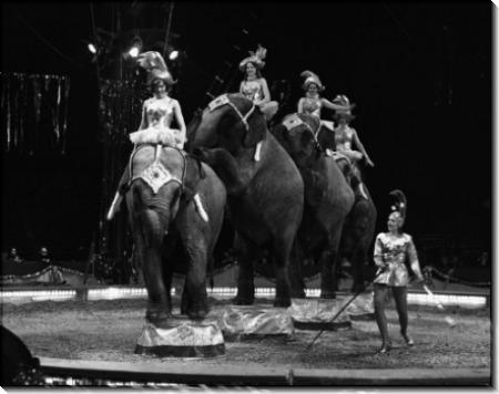 Цирковое представление со слонами